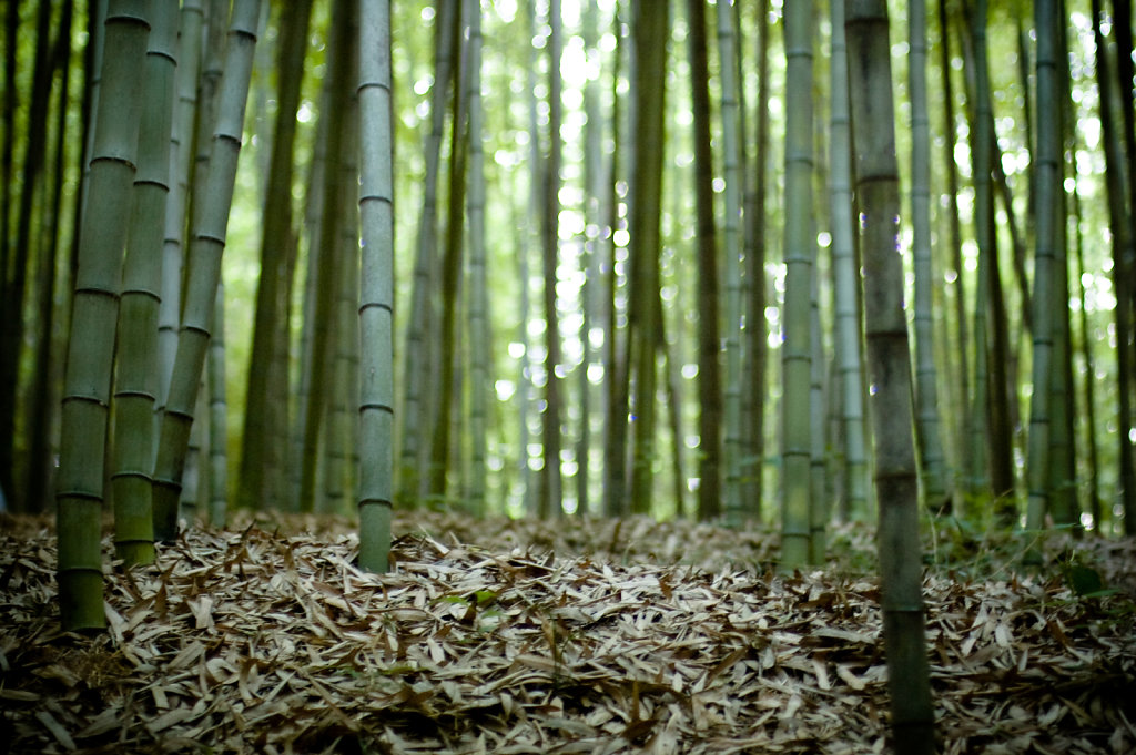 bamboo-forest-50mm-f14-ness-2747009018-o.jpg